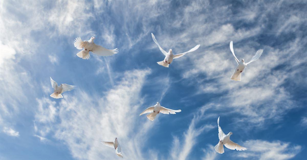 ПЕСНЯ В СВЕТЛОМ НЕБЕ ДОНЕЦКОМ ГОЛУБИНУЮ СТАЮ СКАЧАТЬ БЕСПЛАТНО